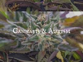 New Research on Cannabis' Effectiveness against Autism