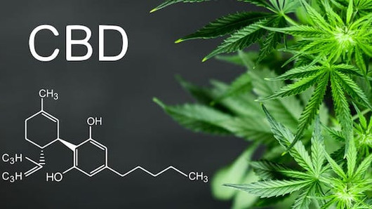 New Research on CBD: No Liver Damage