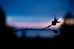 Thorns in an amazing world