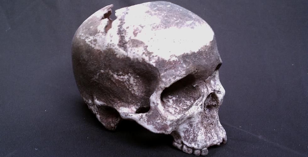 Resin Prop Human Skulls