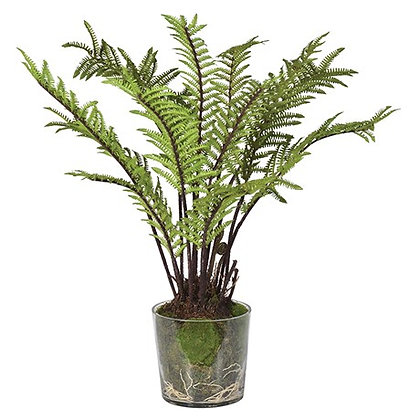 Green Tree Fern with Moss in Glass