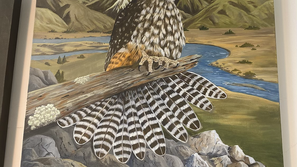 NZ falcon South Island painting!