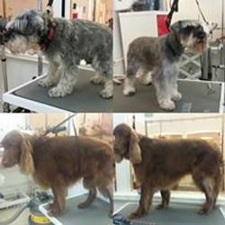 grooming 2