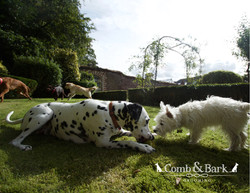 dogs landcsape12