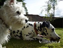 dogs landcsape16