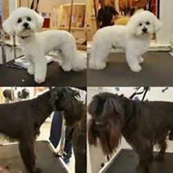 grooming 1