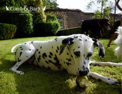 dogs landcsape14
