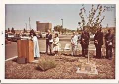 1981 Albuquerque