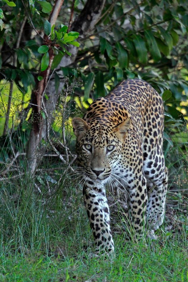 Wilpattu National Park.
