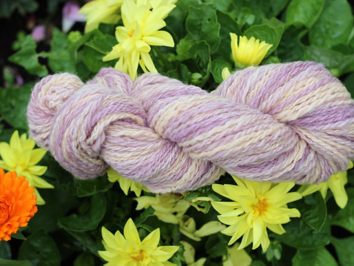 Dyeing with Woad Seed