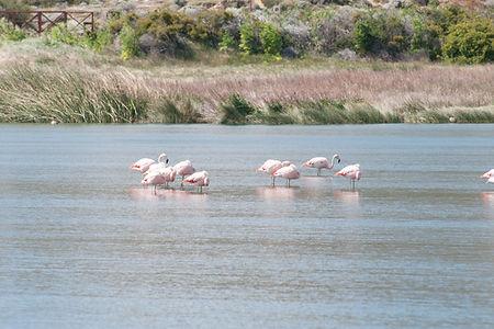 Patagonien_org.jpg