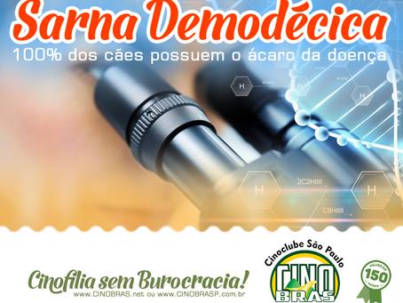 Ácaro da Sarna Demodécica é um habitante natural da pele dos cães