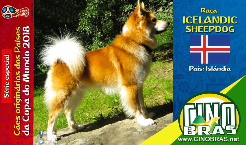 Raça: ICELANDIC SHEEPDOG País Origem: ISLÂNDIA  O Icelandic Sheepdog tem expressão gentil e comportamento feliz. Ele é muito inteligente e fiel aos donos. Esses cães são fáceis de serem treinados, ágeis e resistentes, já que foram desenvolvidos no intuito de cão pastoreio nas montanhas da Islândia.