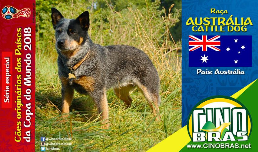 Raça: AUSTRALIAN CATTLE DOG País Origem: AUSTRÁLIA  O Australian Cattle Dog é resistente, independente, enérgico e incansável. Essas são as características que o destaca como um ótimo pastor de gados.