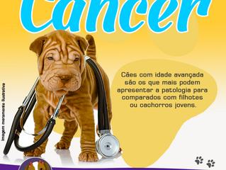 Câncer e animais de estimação