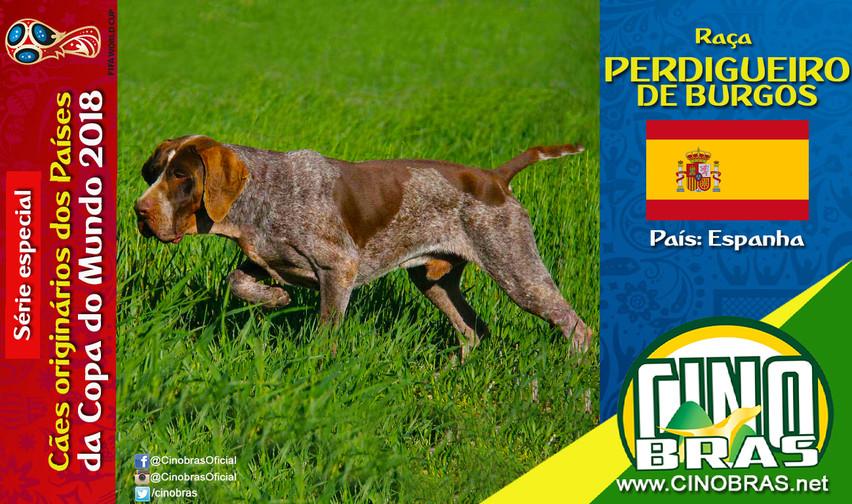 Raça: PERDIGUEIRO DE BURGOS País Origem: ESPANHA  Como o nome já diz, a raça Perdigueiro de Burgos é originária da província de Burgos, Espanha. É um cão de aponte, caráter excelente, dócil e inteligente.