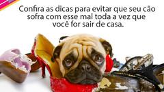 Ansiedade canina | Confira as dicas para evitar que seu cão sofra com esse mal toda a vez que você f