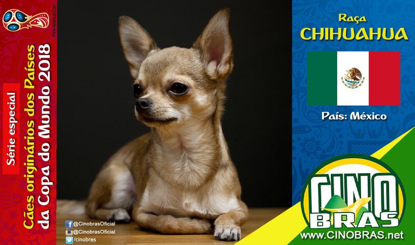 Raça: CHIHUAHUA País Origem: MÉXICO  O Chihuahua é um cão de companhia, bastante protetor dos donos, muito tolerante com crianças e de convivência excelente com outros animais de estimação. Além disso a raça é considerada a menor do mundo.