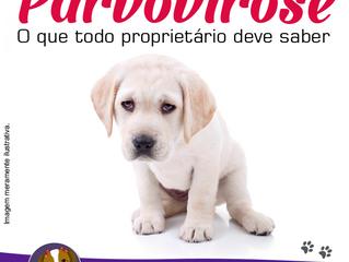 Parvo é uma das doenças mais angustiantes para donos e pets