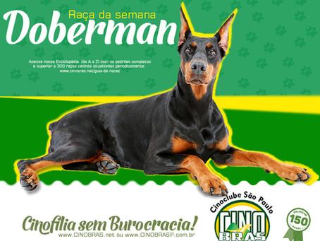 Raça Doberman