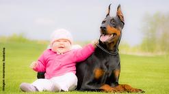 Profissionais em Comportamento Canino expõem qual é a raça ideal para a criança