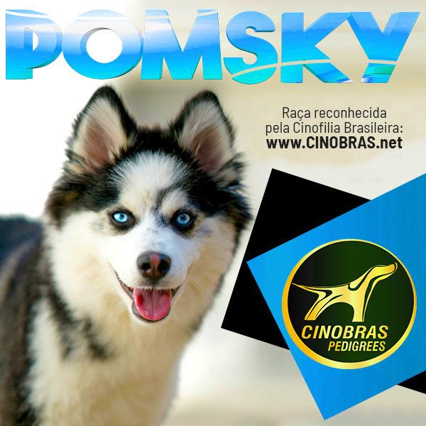 pomsky.jpg