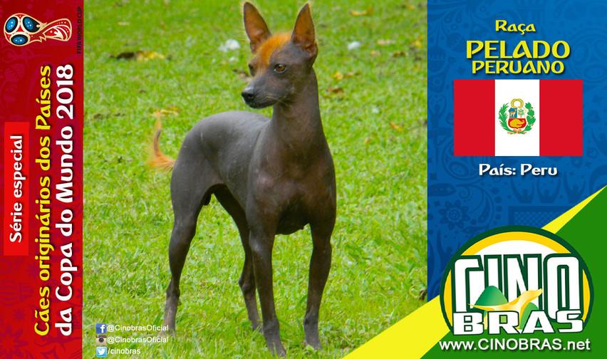 Raça: PELADO PERUANO País Origem:PERU  O cão Pelado Peruano é o único cachorro nativo do Peru. Ele é reconhecido oficialmente como patrimônio nacional do País.   A raça é excelente como cão de companhia, formando um excelente laço de amizade com os membros da família. Além disso, ele é um excelente cão de guard