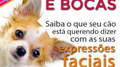 Saiba o que seu cão está querendo dizer com as suas expressões faciais