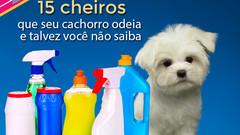 15 cheiros que seu cachorro odeia e talvez você não saiba