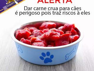 Dar carne crua para cães traz riscos