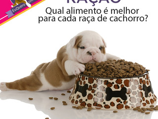 Qual alimento é melhor para cada raça de cachorro?