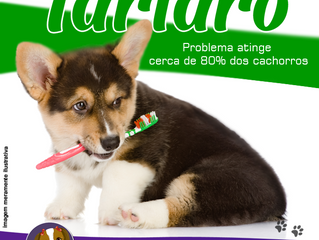 Higiene bucal auxilia na prevenção da placa bacteriana e saúde dos pets