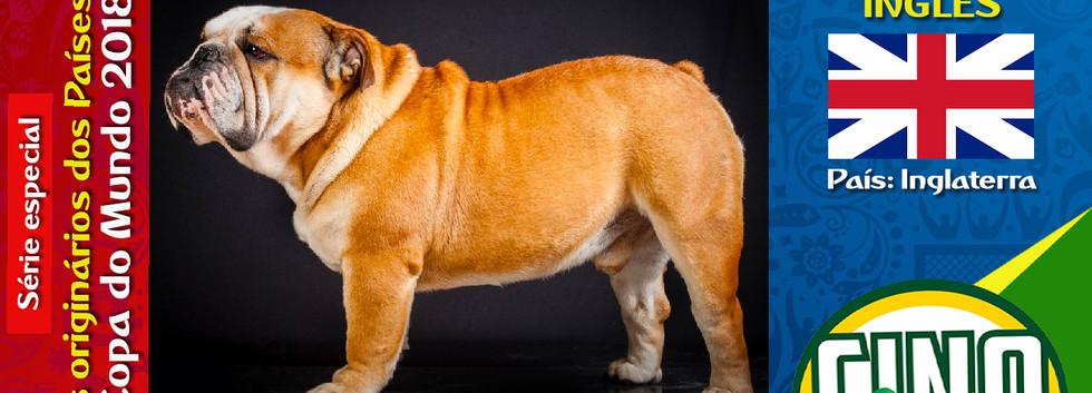 Raça: BULDOGUE INGLÊS País Origem: INGLATERRA  Os cães da raça Buldogue Inglês são ótimos companheiros de crianças e adultos.
