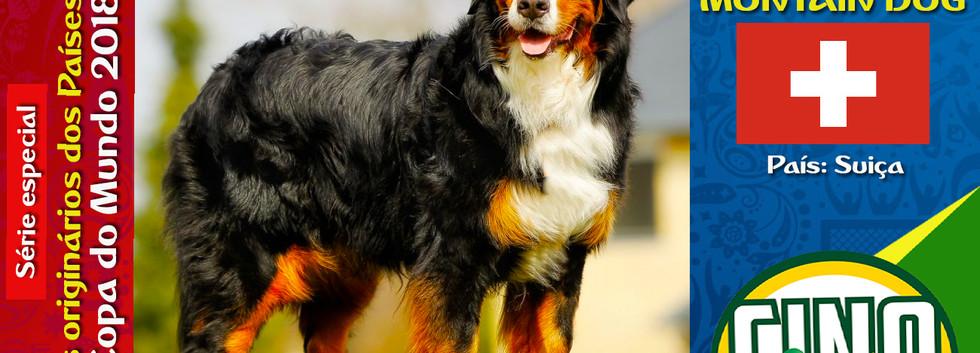 Raça: BERNESE MONTAIN DOG País Origem: SUIÇA  O Bernese Montain Dog é uma raça que se integra muito bem com a família humana. É um cão fácil de conviver e ótimo companheiro. Ele é extremamente devotado e leal.