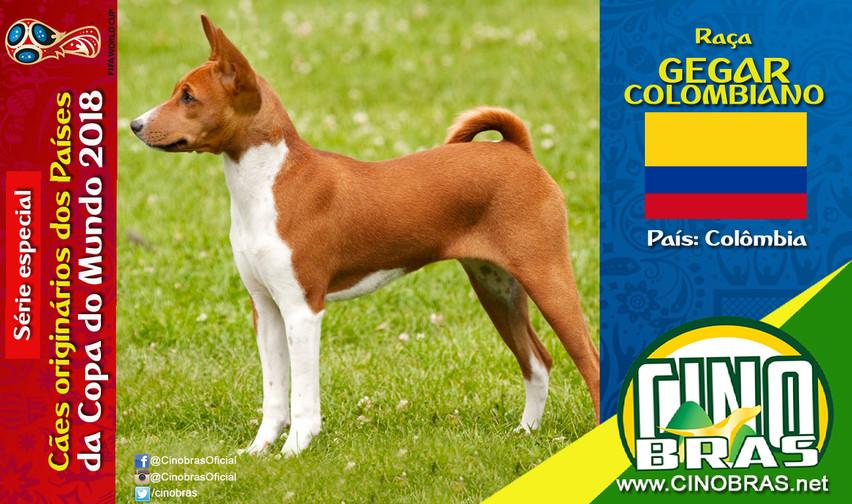 Raça: GEGAL COLOMBIANO País Origem: COLOMBIANO  O Gegar Colombiano é uma raça de ótimo temperamento, mas desconfiada com estranhos.  É um cão inteligente, fiel, fácil de educar e de excelente relacionamento com crianças e outros tipos de animais de estimação, incluindo outros cães.   Dizem que o Gegar Colombiano veio da raça Basenji.