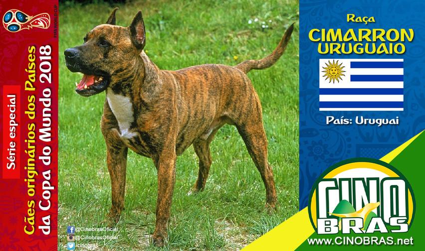Raça: CIMARRON URUGUAIO País Origem: URUGUAI  O Cimarron Uruguaio é usado para guarda e caça. Esse cão é tolerante com a família, mas alerta com estranhos.