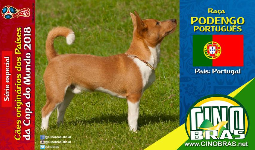 Raça: PODENGO PORTUGUÊS País Origem: PORTUGAL  Os cães da raça Podengo Português são inteligentes, dispostos e corajosos, possuindo grande habilidade para caçar.   Eles são afetuosos com seus donos, sendo excelentes cães de companhia.