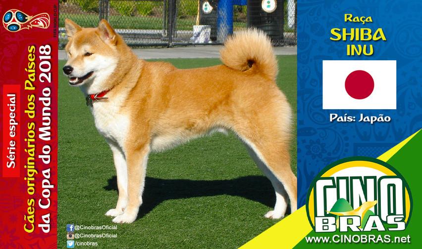 Raça: SHIBA INU País Origem: JAPÃO  O Shiba Inu é auto confiante e independente. É uma raça inteligente, calma e que se adapta bem em apartamento e outras áreas internas.  O Shiba Inu é um cão de porte pequeno!