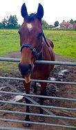 horse on dbgs.jpg