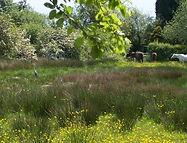 heron on field.jpg