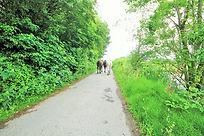 back end of horses.jpg