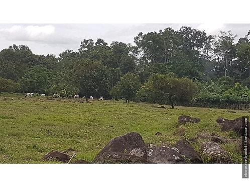 Finca Costa Rica Jimenez de Guapiles