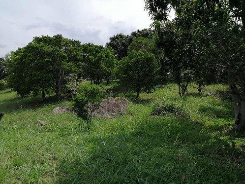 Terreno Colombia Viota Cundimarca Vereda
