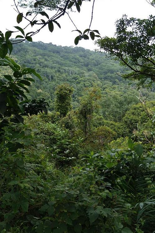 Terreno Costa Rica kilómetro al Sur de la escuela de Barú
