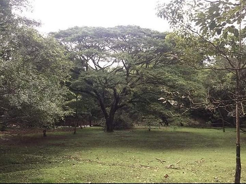 Terreno Costa Rica Cuatro Esquinas Orotina Alajuela