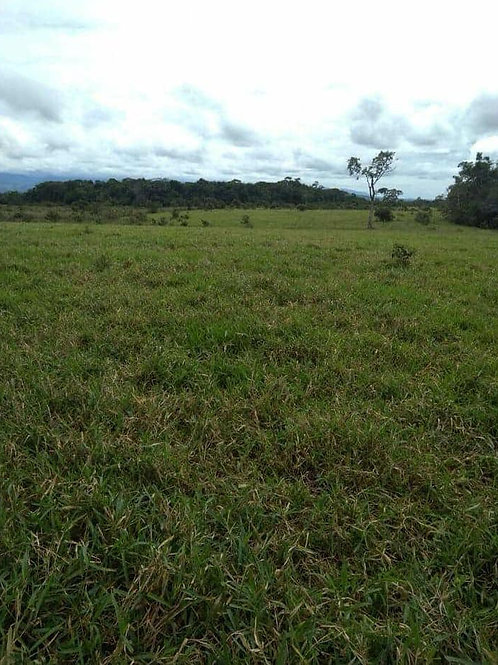 Terreno Colombia Finca Mesetas Meta