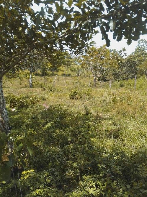 Terreno Costa Rica Colonia Puntarenas de Upala