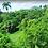 Thumbnail: Terreno Rep Dom Cosón, Las Terrenas, Samaná