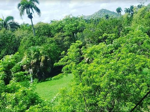 Terreno Rep Dom Cosón, Las Terrenas, Samaná