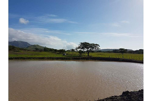 Finca Panama Rio Grande, Penonome, Cocle